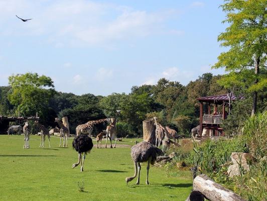 Die Weite der Kiwara-Savanne © Zoo Leipzig
