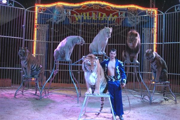 Foto: Circus William / Timo Köppel