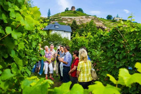 Führung durch das Weingut Hoflössnitz © TVED/Sylvio Dittrich