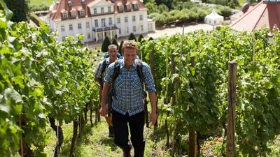 Weinbergwanderung © Schloss Wackerbarth