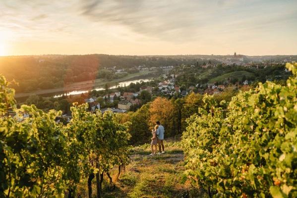 Ein Paar genießt den Sonnenuntergang in den Weinbergen des Weingutes Schuh. Foto: Erik Gross (DML BY)
