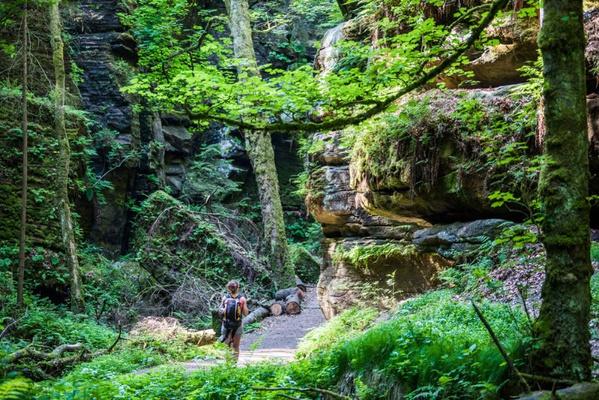Wildnis in der Nationalparkregion Sächsisch-Böhmische Schweiz erleben. Foto: Sebastian Thiel