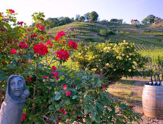 Wein und Kunst genießen im Weingut Drei Herren © Weingut DREI HERREN
