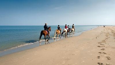 Wer zum Beispiel von einer Reitschule am Strand von Rügen träumt, hat eine gute Motivation für die Quizshow-Teilnahem. stock.adobe.com © Eismann