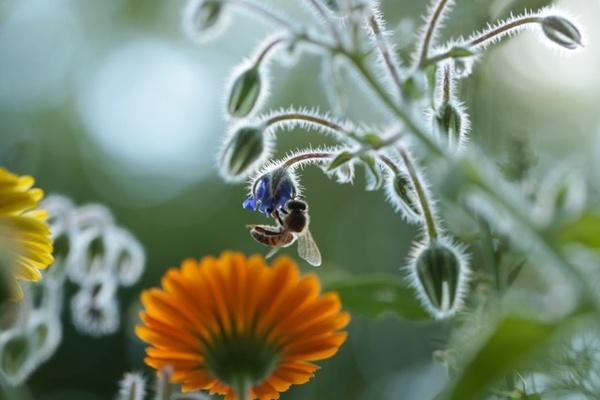 """Fotomotiv """"Blühende Pflanzen in Leipziger Garten"""", Foto © asisi"""