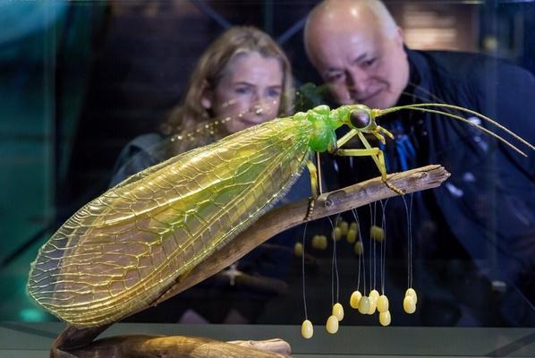 Modell Gemeine Florfliege mit Julia Stoess und Yadegar Asisi / Foto Tom Schulze © Panometer