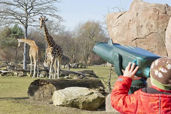 Giraffen auf der Savanne beobachten © Zoo Leipzig