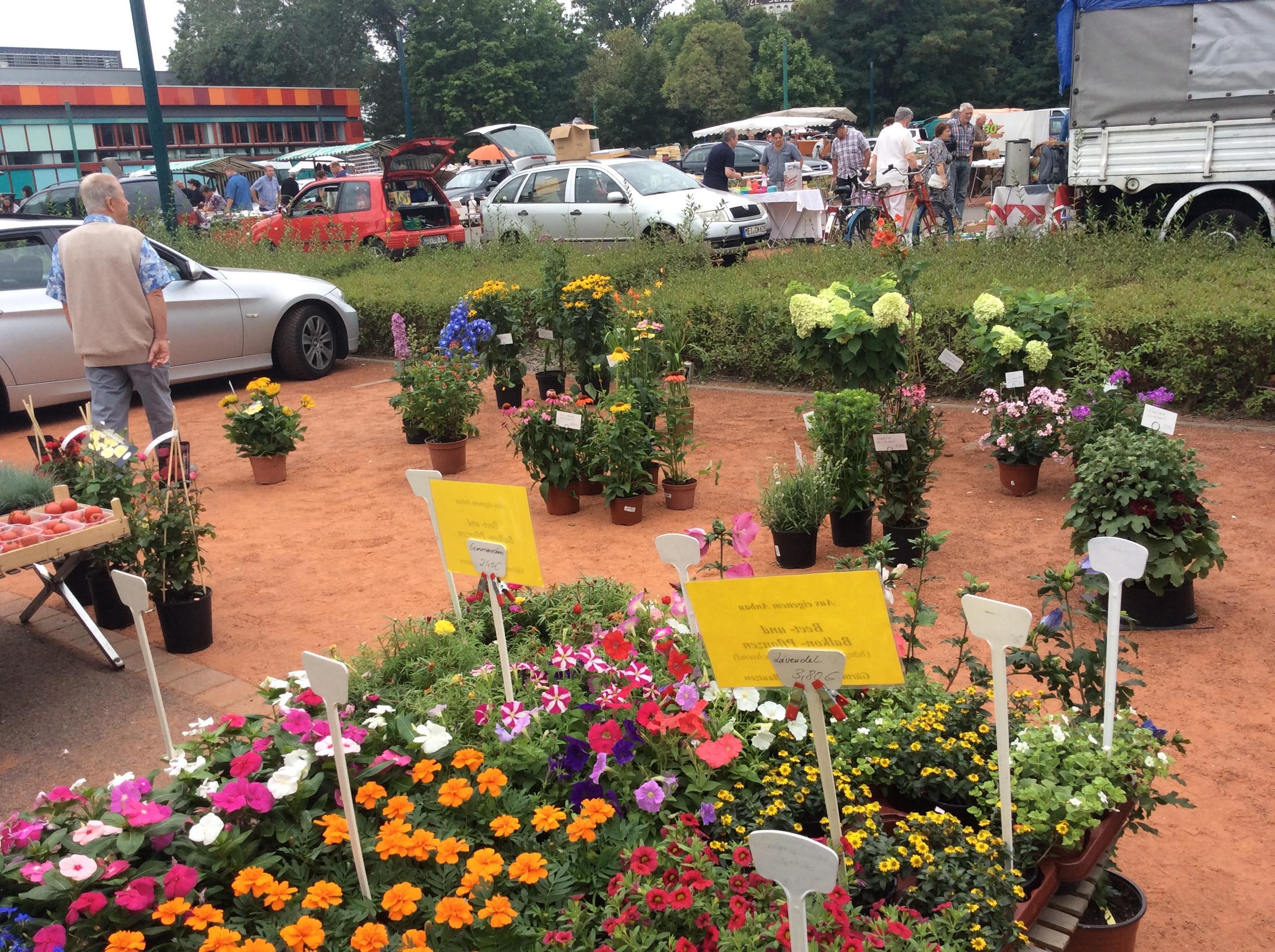 Pflanzen und Gartenmarkt zum Kunst Antik und